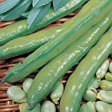 SeeKay Broad Bean Aquadulce 80 seeds Autumn - Spring sowing