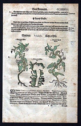 Windengewächse Seide Holzschnitt Kräuterbuch Kräuter herbal -