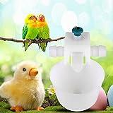 Bolange Tazza d'innaffiatura automatica del pollame del pollo 5PCS Coop Fowl Bird Pigeon Feeder Feeder sistema di acqua