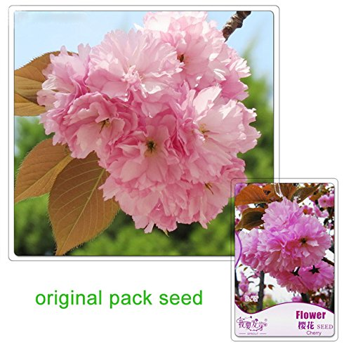 hot-sale-5-seeds-packbalcony-potted-flowering-plants-seeds-of-cherry-treesjapanese-sakura-bonsai-see
