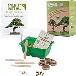 Bonsai Starter Kit avec eBook GRATUIT - Bonzai set avec mini-serre, graines et terre - idée cadeau durable pour les amoureux des plantes (Graines: Olivier + Pin Australien)