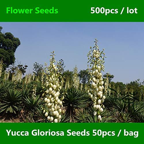 Shopmeeko ^^ Weit kultivierte Yucca Gloriosa ^^^^ 500pcs, Schöne Familie Asparagaceae Flower ^^^^, blühende Pflanze Spanischer Dolch ^^^^