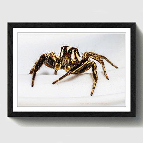 BIG Box Art Jumping Spider 10,2cm Print mit schwarzem Rahmen, Mehrfarbig, A2, 24,5x 18_ P, Holz, schwarz, 24.5 x 18-Inch (Spider Jumping Schwarzes)