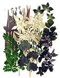 Gepresste Blumen gemischt, Edelweiß, verschiedene grüne Blätter für Blumenkunst, Handwerk, Scrapbooking