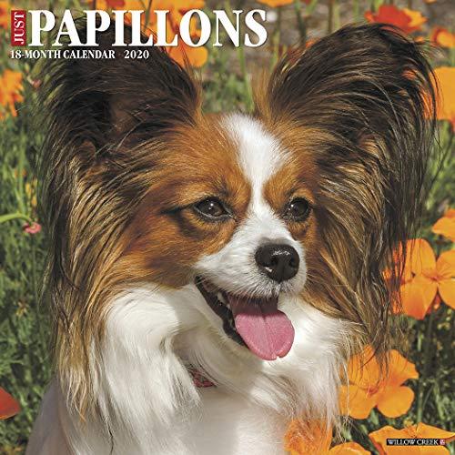 Just Papillons 2020 Wall Calendar (Dog Breed Calendar)