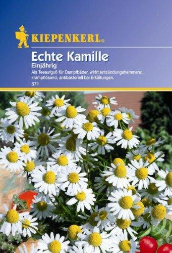 Kiepenkerl Kamille Einjährig Echte