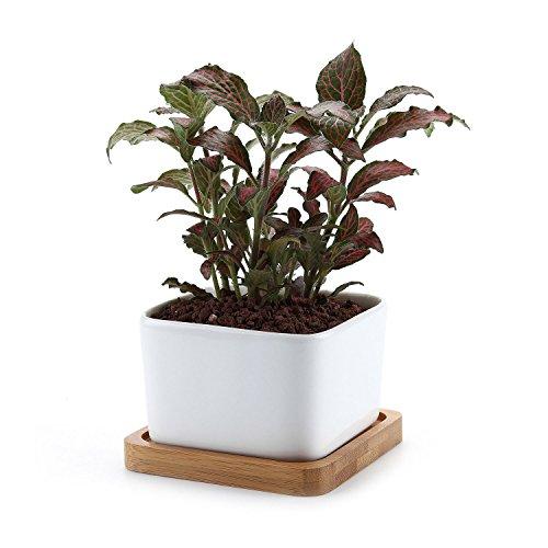 t4u-cuadrado-blanco-no1-ceramicos-planta-maceta-suculento-cactus-planta-maceta-planta-contenedor-viv