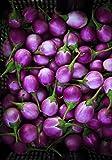 Seedeo Lila Eierbaum (Solanum melongena) 20 Samen