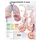 Understanding Asthma - Tabla anatómica en español (Entenden El Asma)