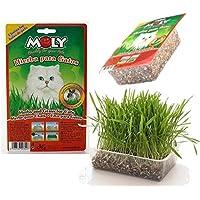 Moly - Hierba para Gatos Purgante y Digestiva con Bandeja Gatera - DAIS:20302