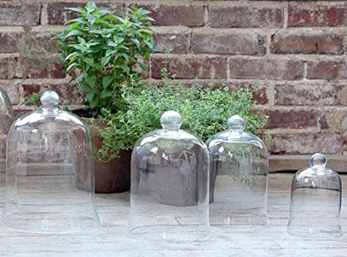 glass-cloche-bell-jar-petite-clear-by-home-decorators-collection