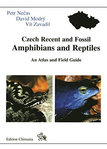 Chimaira Recent & Fossil Czech Reptiles