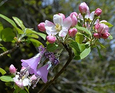 Boucles d'oreilles fleur violet du lavande avec petits cristaux Swarovski / bijoux fée violet / romantique / elfique / clochesbleus / bijoux fleurs violets / kawaii / mori girl / elfe / mignon