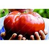 100pcs Gaint tomate Semillas más grandes semillas de hortalizas comestibles semillas orgánicas Bonsai del mundo Home Jardín Plantas en maceta