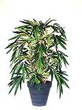 SALE: Schöner Natur Bambus (Kunstpflanze) ca. 90 cm getopft!