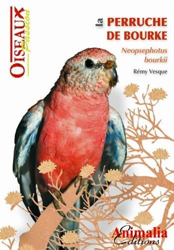 La Perruche de Bourke par Vesque Remy