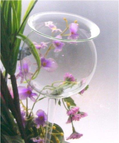 Pflanzenpflege aus Glas