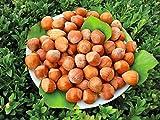 Qulista Samenhaus - 5pcs Rarität Haselnuss Rote Zellernuss | Zier- und Obststrauch Baumsamen Obstsamen mehrjährig Winterhart