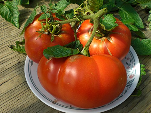 premier-seeds-direct-tomato-beefsteak-mortgage-lifter-finest-organic-seeds-pack-of-80