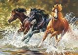 Unbekannt Puzzle 500 Teile - Pferde in Galopp - Wasser - Wildpferde / Tier - Tiere Stute Hengst Fohlen - Tierpuzzle / Pferdepuzzle Araber Brauner