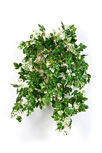 artplants Set 'Kunstpflanze Scheinrebe + Gratis UV Schutz Spray' - Künstlicher Hänger SICHIA, auf Steckstab, grün-weiß, 50cm