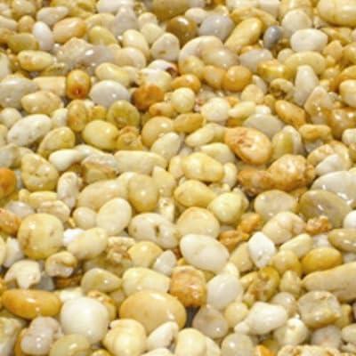 Summer Corn Chippings OGD146