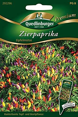 Zierpaprika, Capsicum anuum, Saatgut, Sämereien, ca. 25 Samen