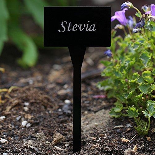 Verre acrylique Panneaux de plantation carré noir – Jardin/connecteur, herbes, panneaux, plante – Choix + nom au choix Stevia