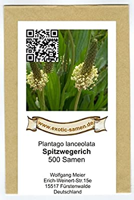 Spitzwegerich - Plantago lanceolata - Arzneipflanze des Jahres 2014 - 500 Samen von exotic-samen bei Du und dein Garten