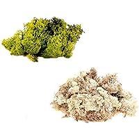 inerra Finnland Moos - Packung zu 2 gemischte Farben 50g Beutel - Rentier Moos Handwerk Pflanzen Töpfe Blumen... preisvergleich bei billige-tabletten.eu