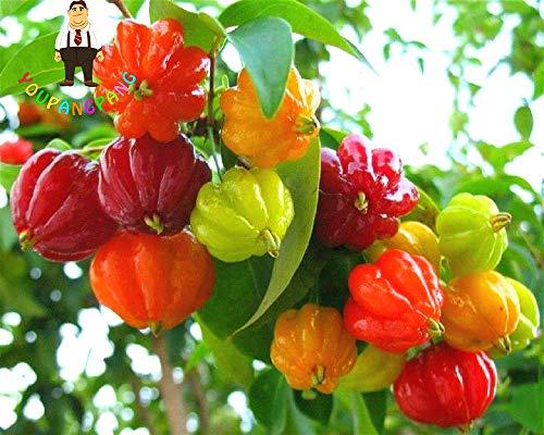Shopmeeko 10 Stücke Surinam Kirsche pflanzen Pitanga Obst pflanzen Brasilianische Kirsche Rot Seltene Pflanze Für Hausgarten Bio Obst bonsai -