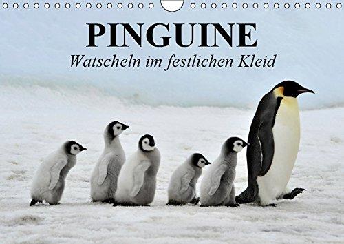 Pinguine - Watscheln im festlichen Kleid (Wandkalender 2019 DIN A4 quer)