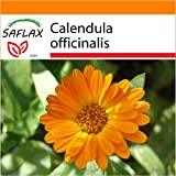 SAFLAX - Garden in the Bag - Botón de oro - 50 semillas - Calendula officinalis