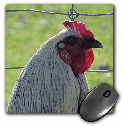 jackie-popp-nature-n-wildlife-birds-white-and-red-rooster-mousepad-mp-50402-1