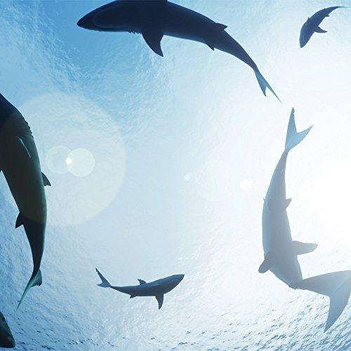 JP London cnvsqm2271Galerie Leinwand in Dick Schwerer Galerie 2Wickeln auf Leinwand, Shark Tank Woche Ocean Beute bei 22in von 22in (Beute Tank)