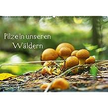Pilze in unseren Wäldern (PosterbuchDIN A4 quer): Pilze sind faszinierende Gewächse die begeistern (Posterbuch, 14 Seiten) (CALVENDO Lifestyle) ... Design Fotografie by Tanja Riedel, Avianaarts