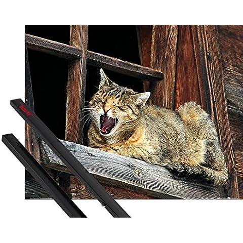 Poster + Sospensione : Gatti Poster Stampa (50x40 cm) Siesta Del Gatto, Non Disturbare E Coppia Di Barre Porta Poster Nere 1art1® - Non Disturbare Cat