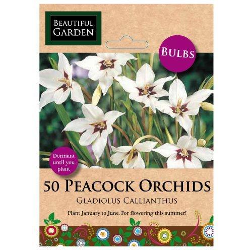 50 Orchidées de paon