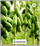 FERRY Hohe Wachstum Seeds Nicht NUR Pflanzen: Seed Papaya-Samen Pusa Fruchtsamen für Gemüsegarten Obstsamen Garten Packung Saatgut (10 pro Paket)