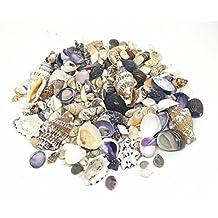100 G de conchas marinas Mix 1 tamaño pequeño, de conchas marinas para Manualidades pantalla