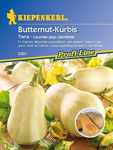 Kiepenkerl Butternut - Kürbis Tiana