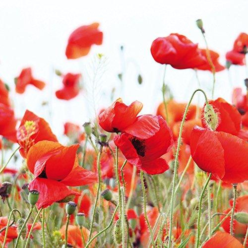 Apple iPhone 5 Housse Outdoor Étui militaire Coque Coquelicot Fleur Fleur Cas Tough terne