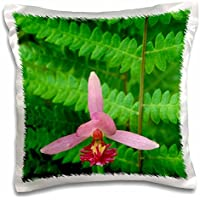 Danita Delimont - Orchids - Michigan, Rose