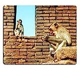 Mousepads Affemutter und Ihr Sohn, die auf Wand im Tempel durch Tony Mat sitzen Desktop-Laptop-Gaming-Mausunterlage
