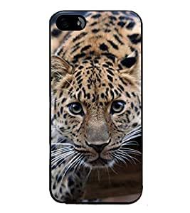FUSON Tiger Eady To Attack Designer Back Case Cover for Apple iPhone 4S