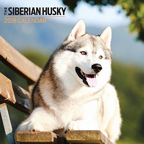 Siberian Husky 2018Mini Kalender