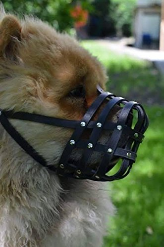 light-leather-dog-muzzle-chow-chow-other-similar-snouts-ch1-black