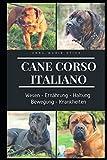 Cane Corso italiano: Alles zum Wesen und Ernährung, seiner Haltung und Bewegung und alles Wichtige über Rassekrankheiten