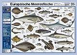 Europäische Meeresfische (Planet-Poster-Box)