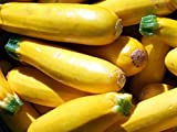 Zucchini - Gelb - Golden - 8 Samen